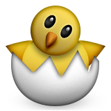 Baby chick hatching out of egg