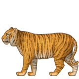 Tiger with full body