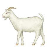 Goat with full body
