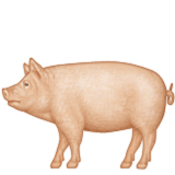 Pig with full body