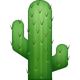 Cactus with two arms